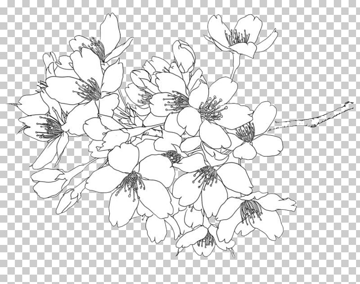Cherry blossom Illustration, Line drawing flowers, white.
