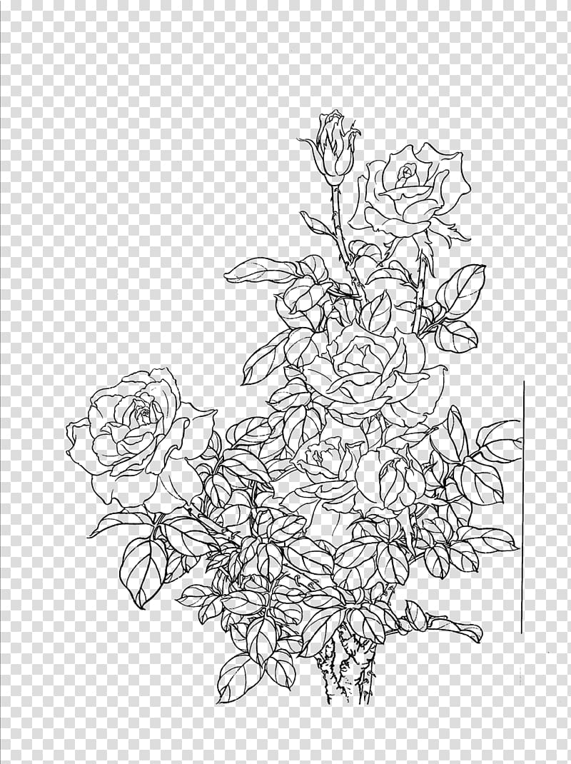 Flower Painting Drawing, Flowers line drawing artwork.