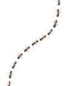 Line of ants clipart » Clipart Portal.