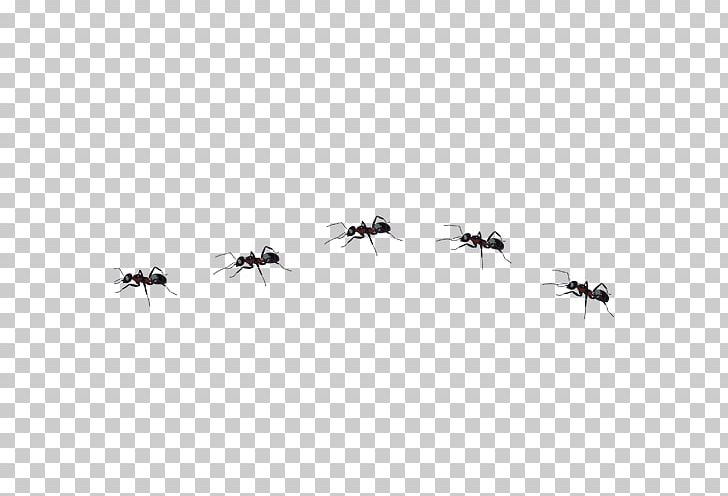 Ant Insect PNG, Clipart, Animals, Ant, Ant Cartoon, Ant Line.