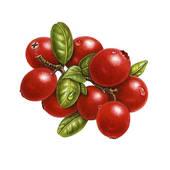 Cranberry Sauce Clipart.