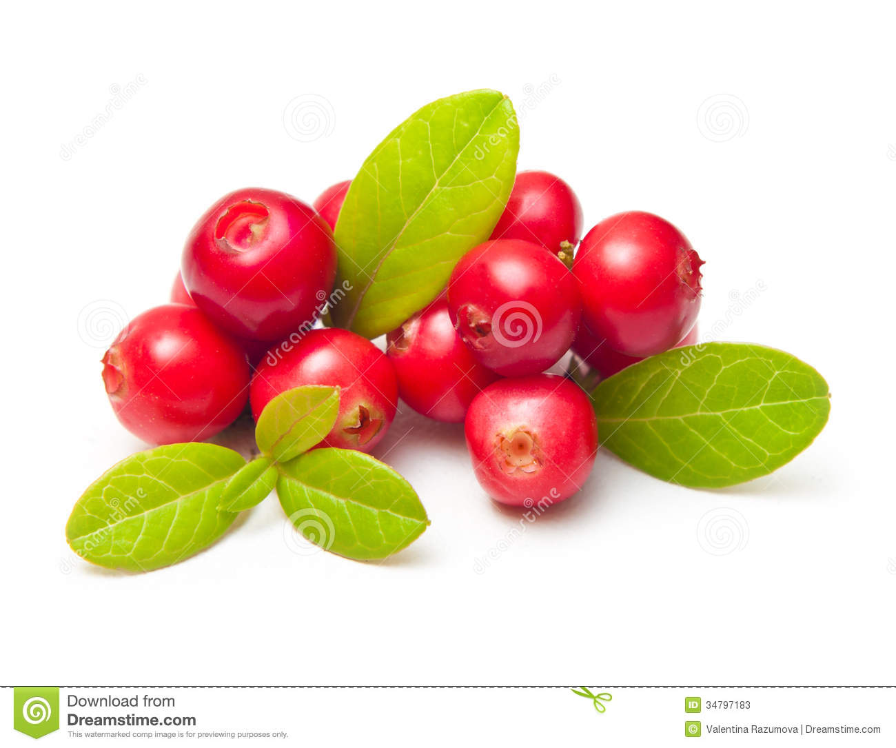 Forest Berry Cowberry Stock Images.