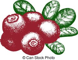Lingonberry Illustrations and Stock Art. 132 Lingonberry.