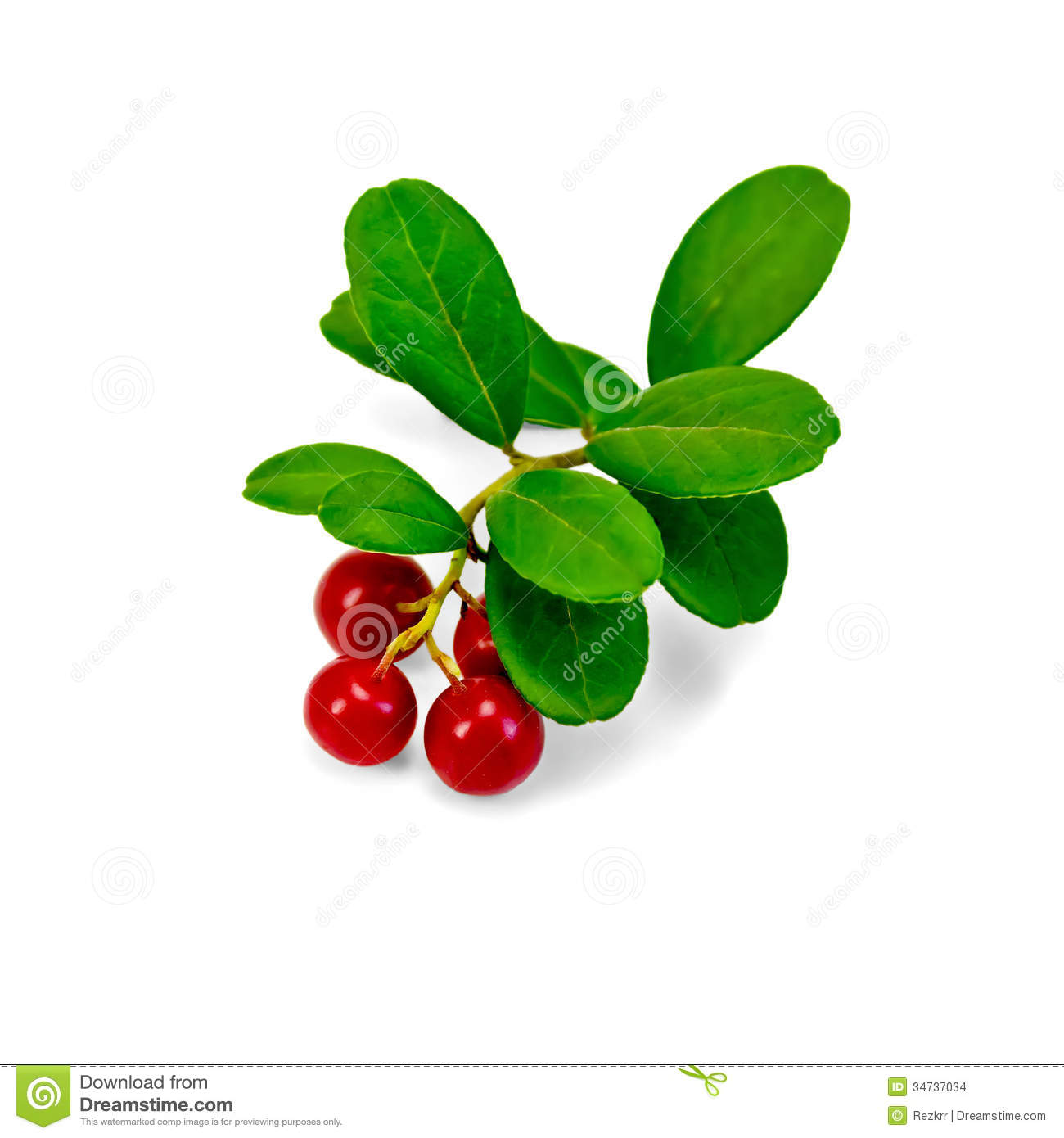 Lingonberry With Leaves Stock Images.