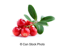 Lingonberry Stock Photo Images. 1,876 Lingonberry royalty free.