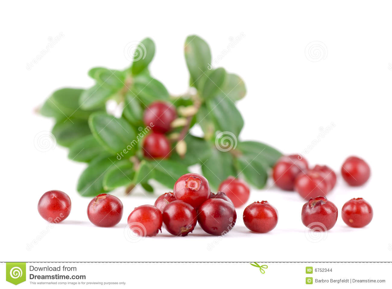 Lingonberry Stock Images.