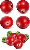 Lingonberry Clip Art.
