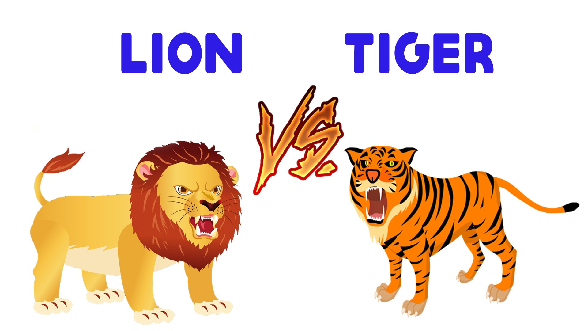 lion and tiger clipart #12