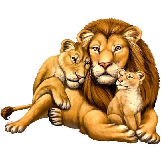 Beautiful Lion Family Tattoo Design.