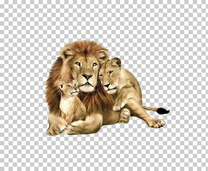 Baby Lions East African lion Lion Family Book Tiger Felidae.