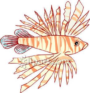 Lion Fish.