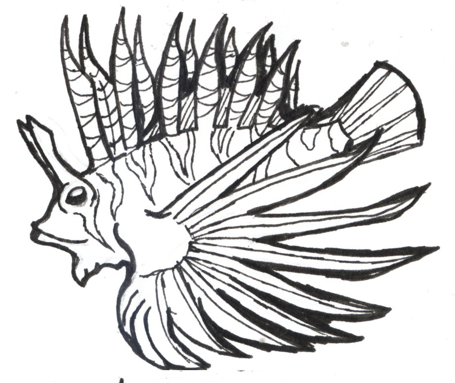 How To Draw A Lionfish Step By Step.