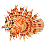 Red Lionfish Stock Illustrations.