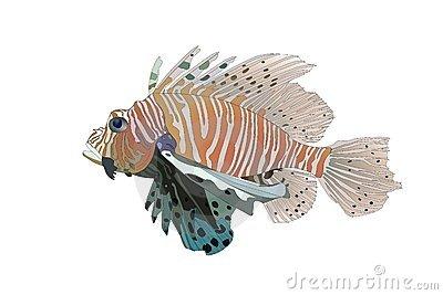 Lionfish Stock Illustrations.