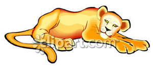 A Lion Cub Laying Down.