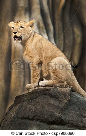 Stock Photography of Proud Little Lion.