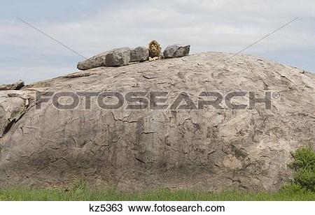 Stock Photo of male lion lying on top of rocky kopje serengeti.