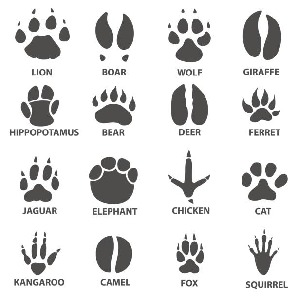 Top 60 Lion Paw Clip Art, Vector Graphics and Illustrations.