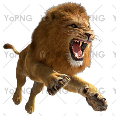 Lion png free download for design.