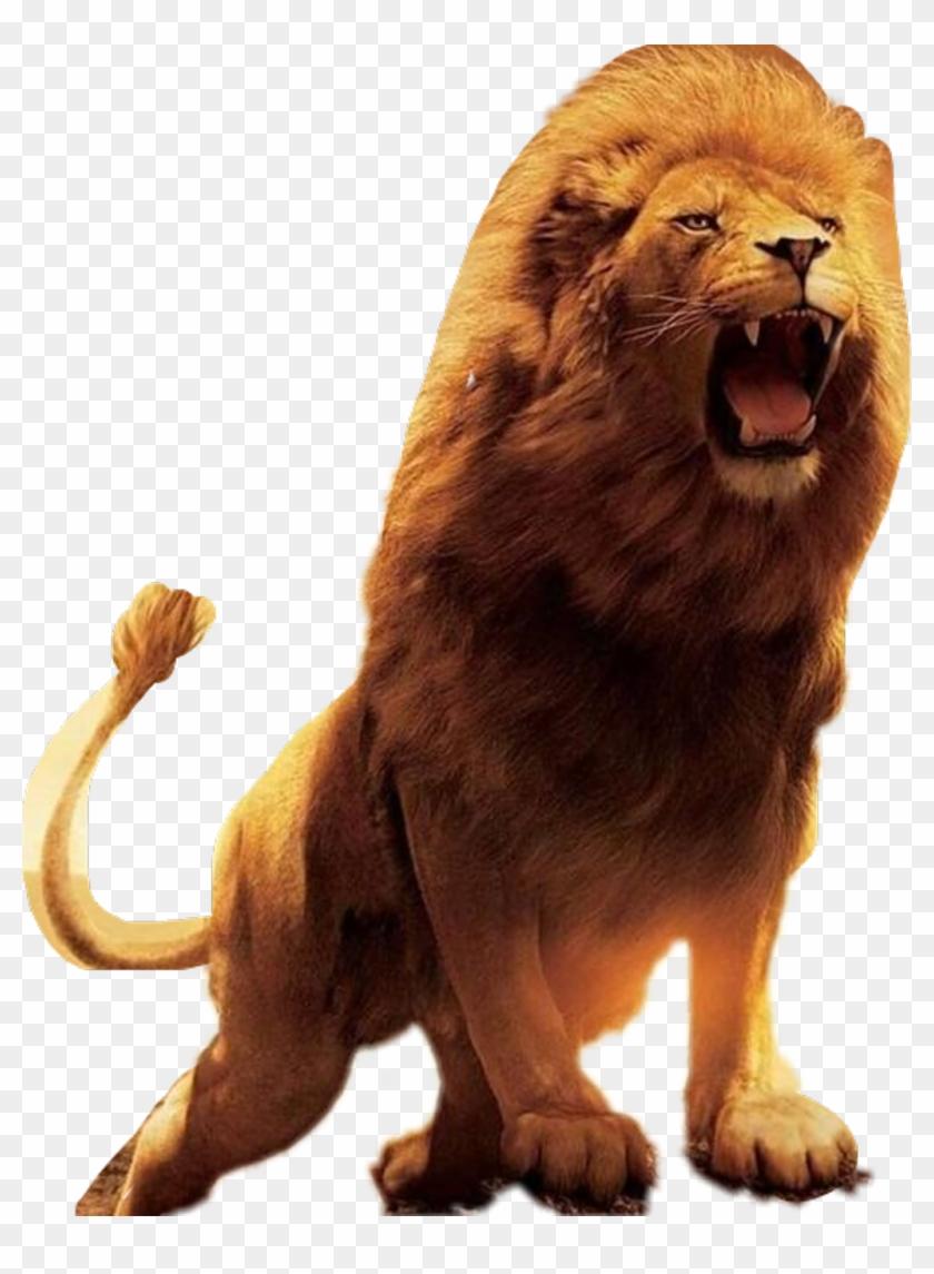 Lion Sticker, HD Png Download.