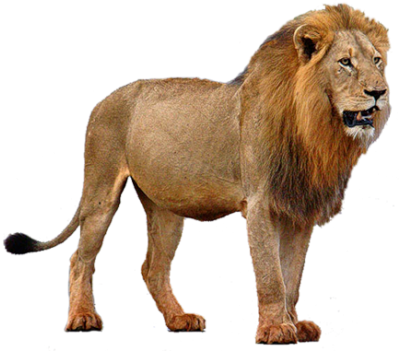 Lion PNG Image with Transparent Background.
