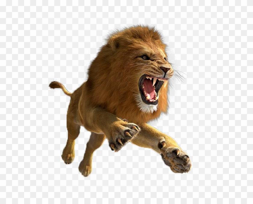 African Lion Png Image.