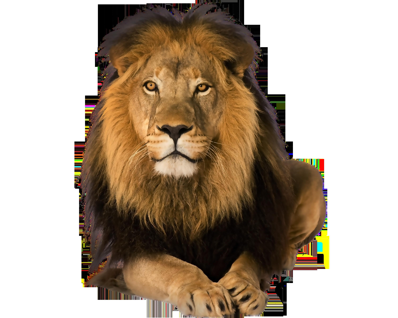 HQ Lion PNG Transparent Lion.PNG Images..