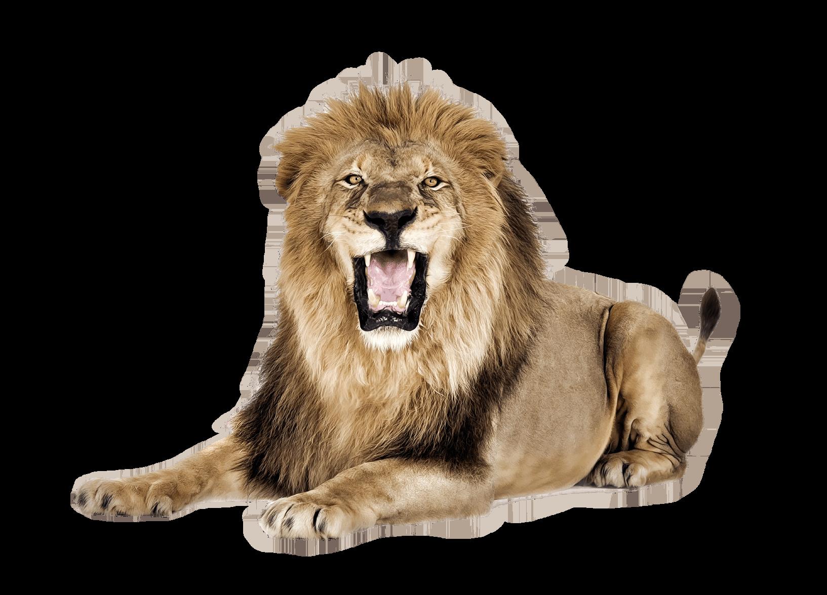 Lion Roar transparent PNG.