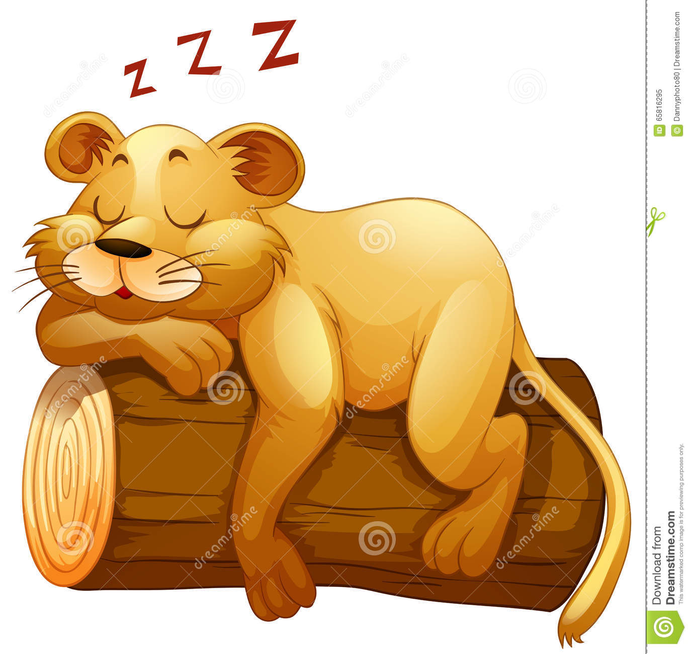 White Lion Sleeping Stock Photos, Images, & Pictures.