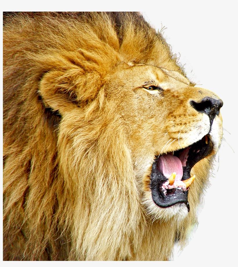 Lion Roar PNG & Download Transparent Lion Roar PNG Images.