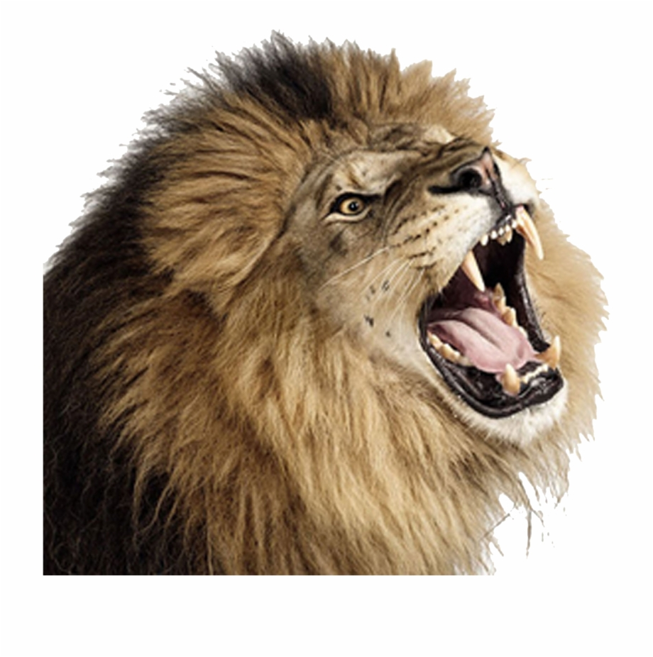 Download Lion Png Transparent Images Transparent Backgrounds.