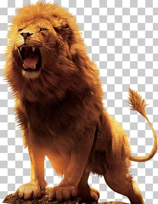 Download Free png Lion Roar Png (88+ images in Collection.