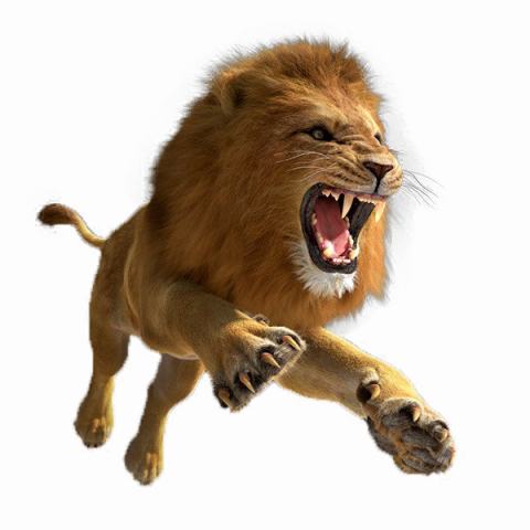 African Aggressive Lion Roaring Fighting PNG Vector.