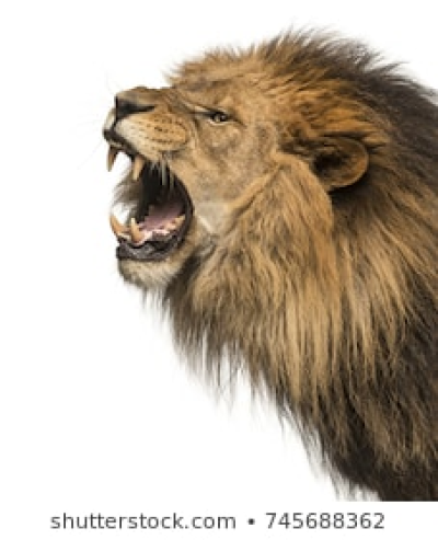 Roaring Lion Images PNG.