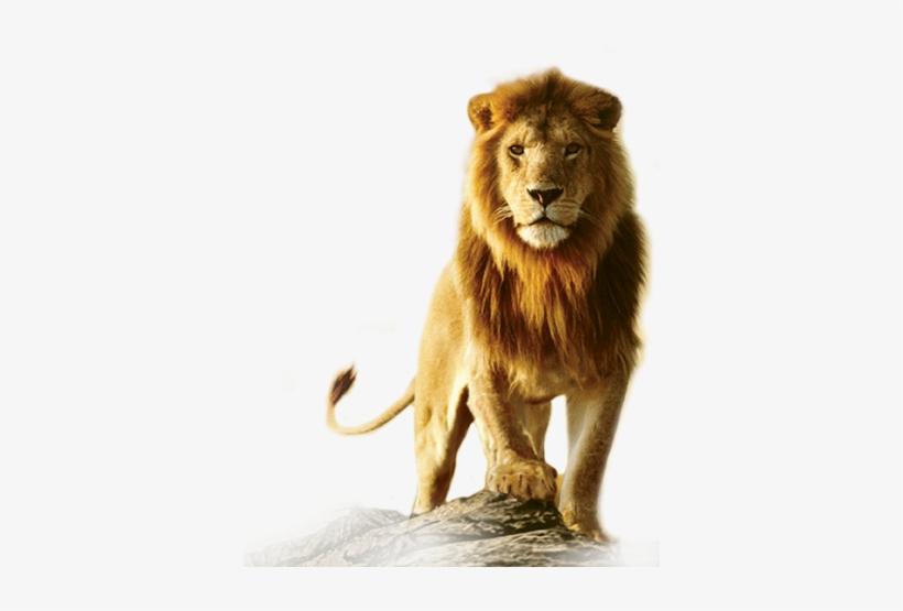 Lion Roar Png.