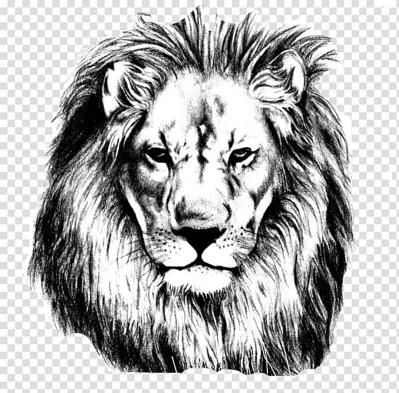 Lion stencil , Lion Drawing Pencil Sketch, Lions Head.