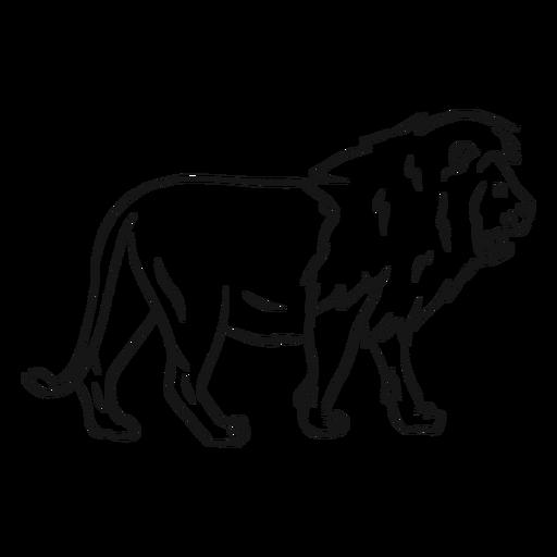 Lion king mane tail sketch.