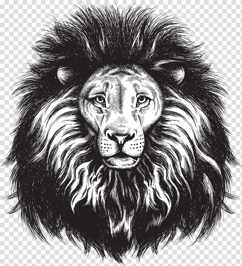 Black and white sketch of lion head, Lionhead rabbit Lions.