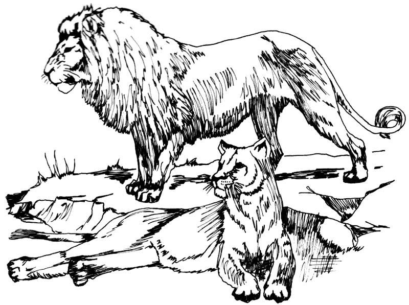 Free Lion Clipart, 1 page of Public Domain Clip Art.