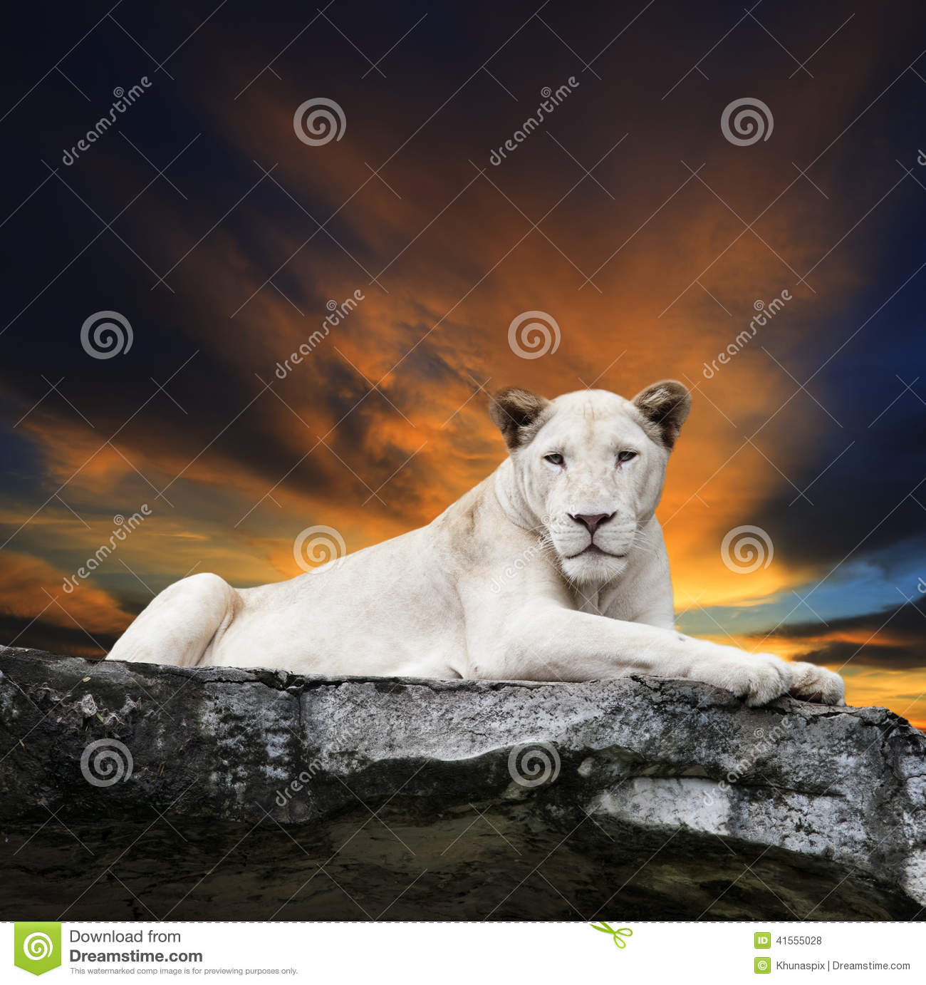 Close Up Face Of White Lioness Lying On Rock Cliff Against Beaut.