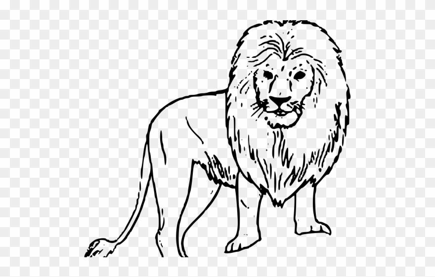 White Lion Clipart Black Background.