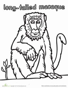 Learn about toque macaque monkeys and their habitat with this free.