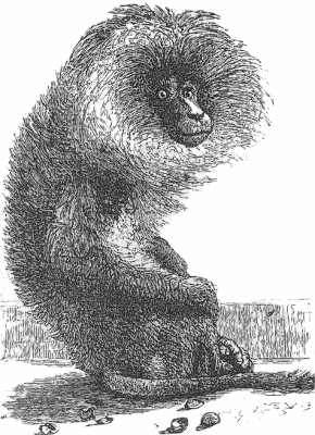 Free Old World Monkey Clipart, 1 page of Public Domain Clip Art.