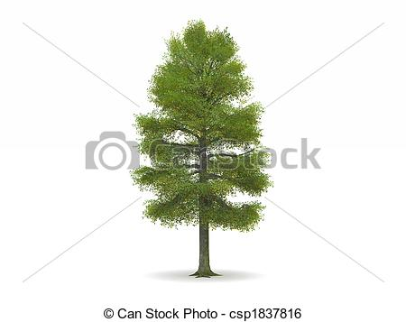 Stock Illustration of Lime or Linden Tree with Green Leaves.