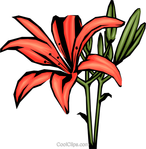 Colorful Lilies Royalty Free Vector Clip Art illustration.