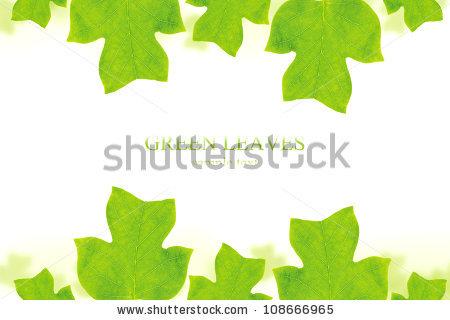 Liriodendron Tulipifera Stock Photos, Royalty.