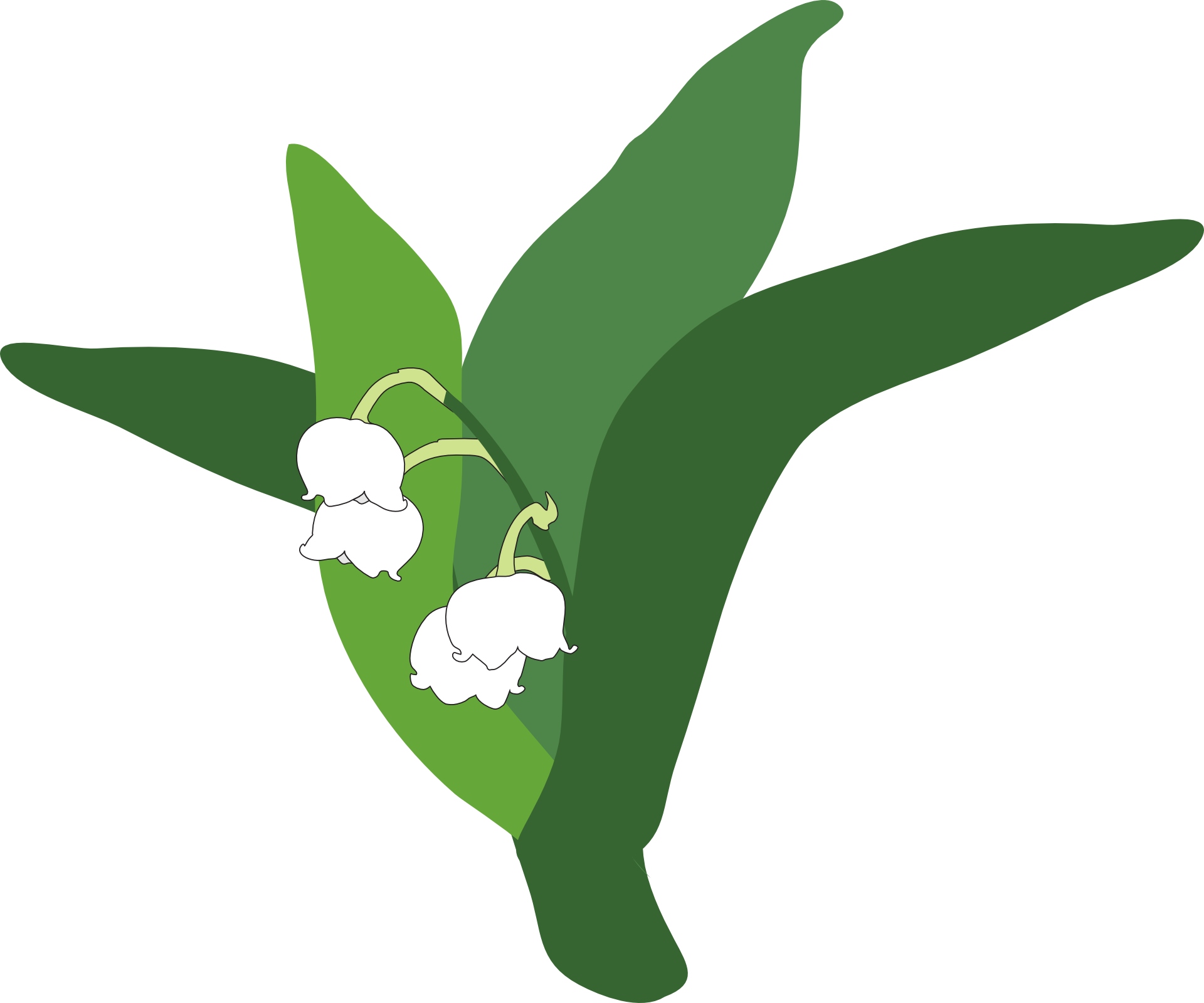 Lily Of The Valley Clipart Transparent.