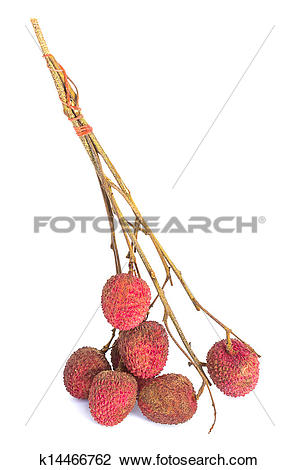 Stock Photo of Ripe fruit of the lychee tree (Litchi chinensis.