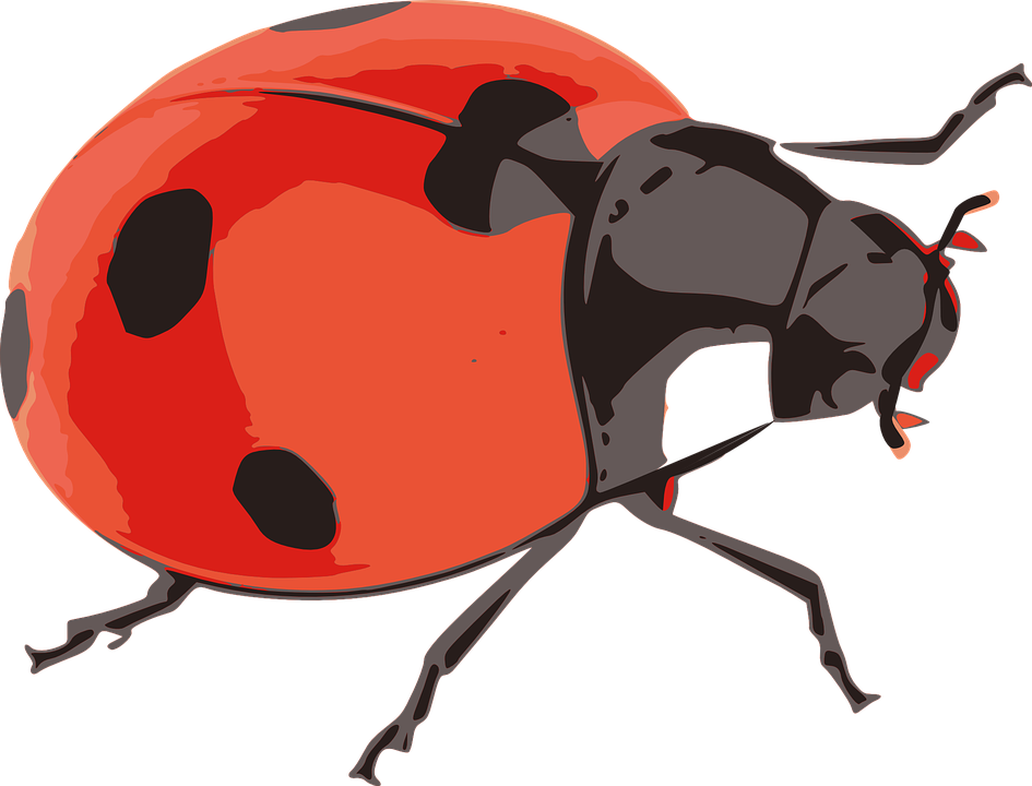 Free vector graphic: Ladybug, Red, Insect, Nature.