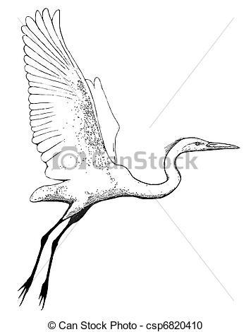 Stock Illustration of Great Egret flying.